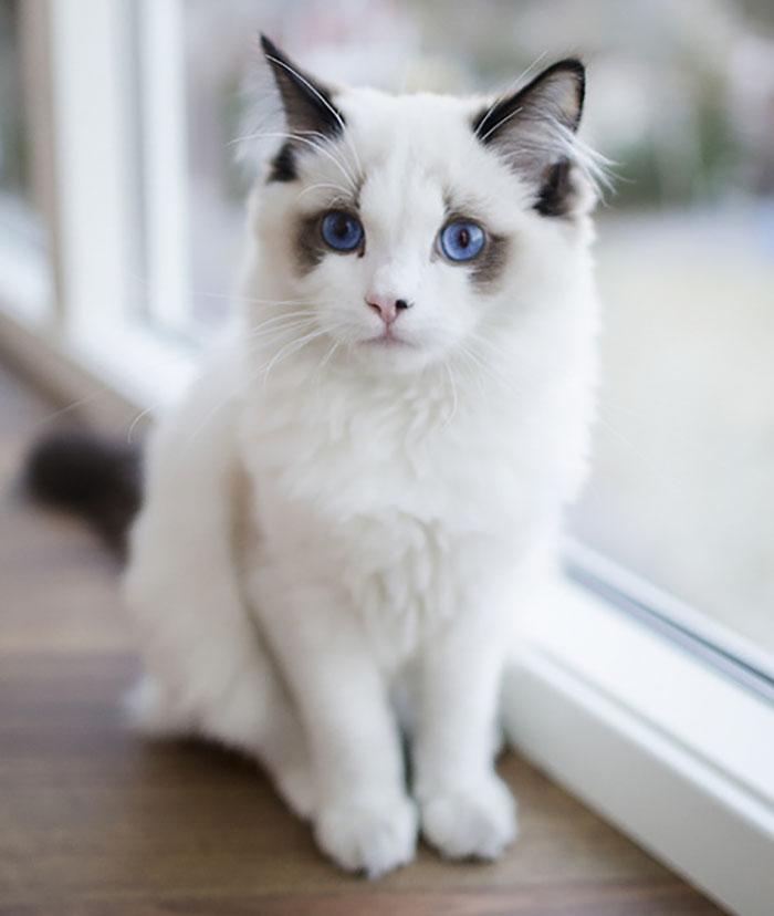 os gatos mais bonitos do mundo