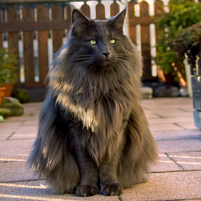 os gatinhos mais lindos do mundo