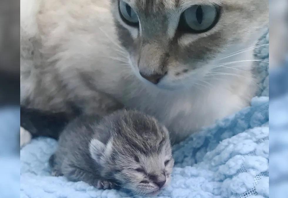 gatinha adorou filhote