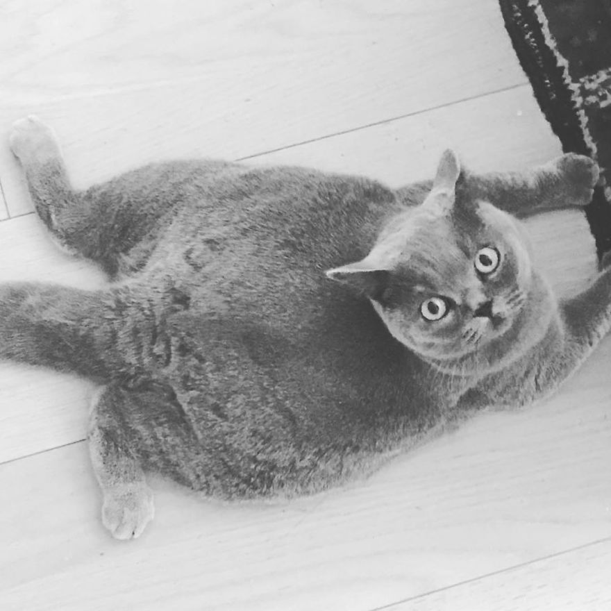 gatinha com escoliose foi adotada