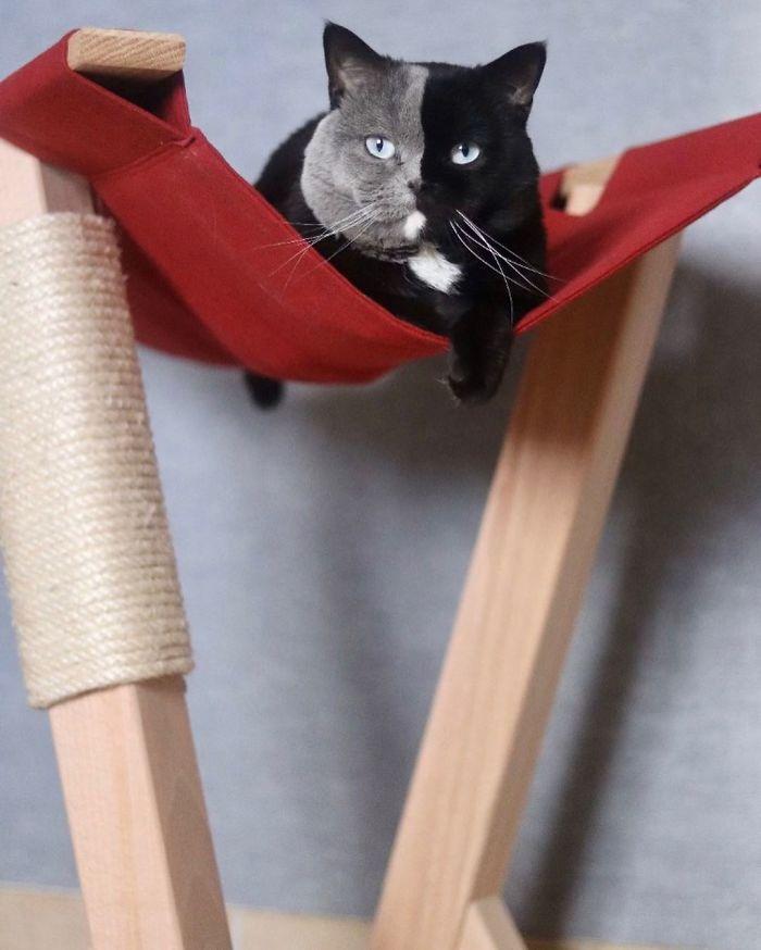 lindo gatinho com rosto dividido