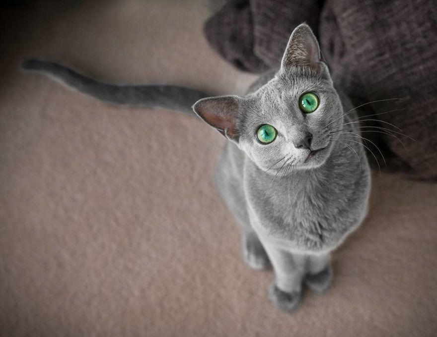 gatos mais bonitos do mundo