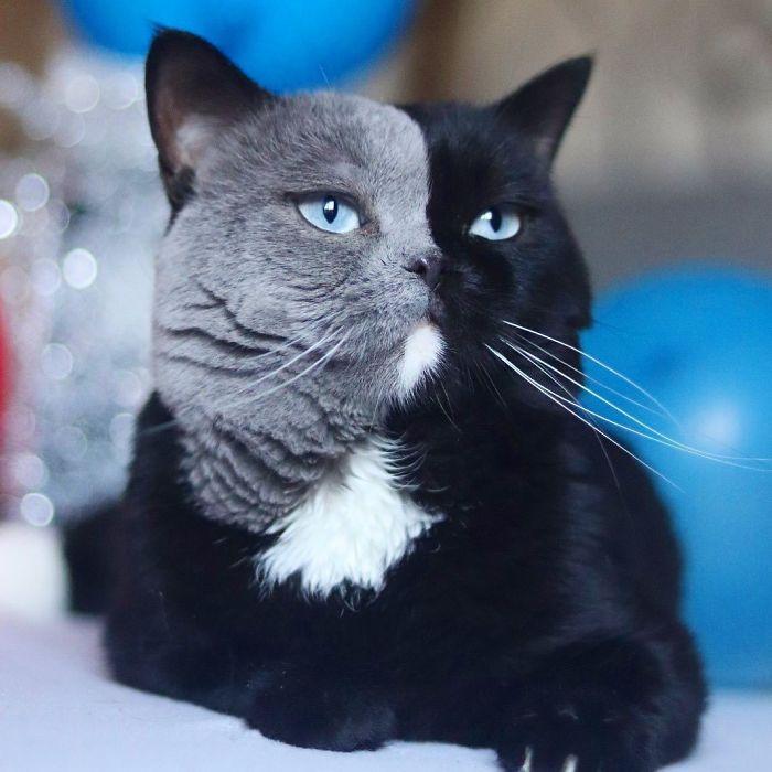 gato mais lindo