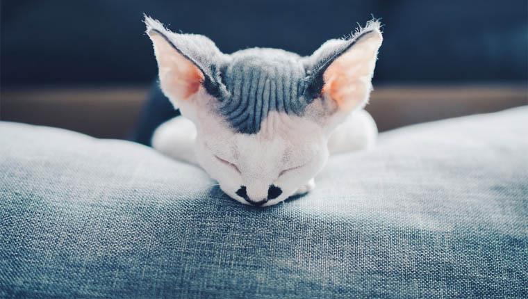 Curiosidades sobre gatinhos