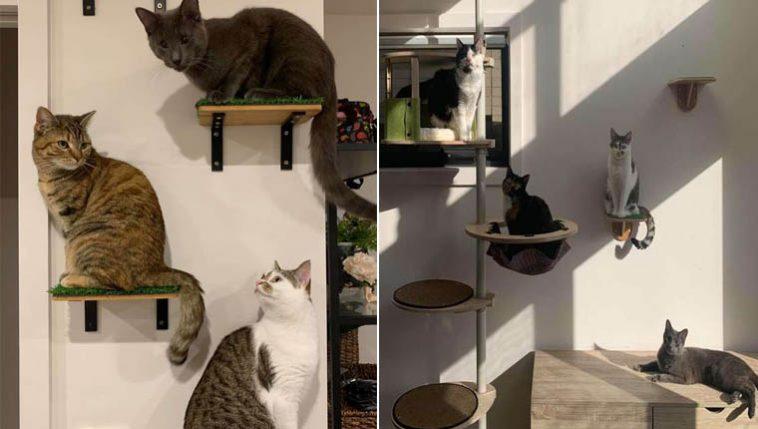 Família transforma casa em playground para gatinhos