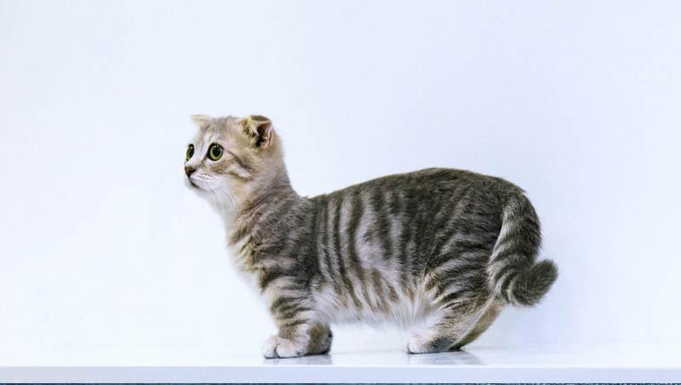 Fatos mais curiosos sobre gatinhos