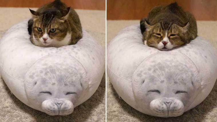 Gatinho se apaixona por almofada de foca