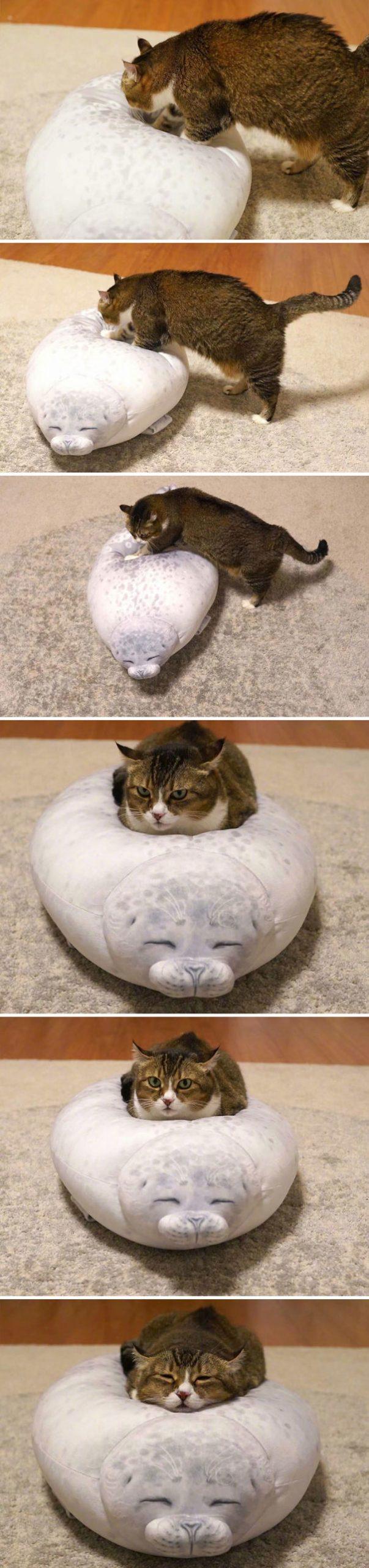 gato com almofada