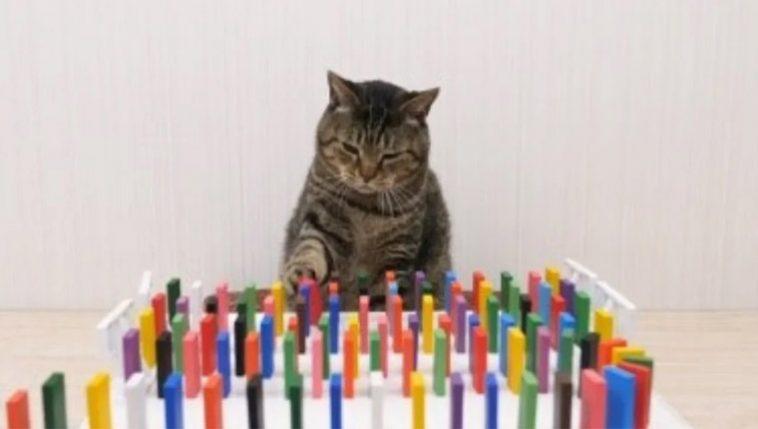 efeito dominó gatos