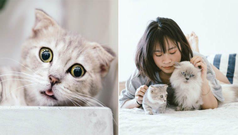 fatos mais curiosos sobre gatinhos curiosidades do mundo