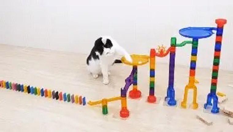 gatinhos brincando com dominó