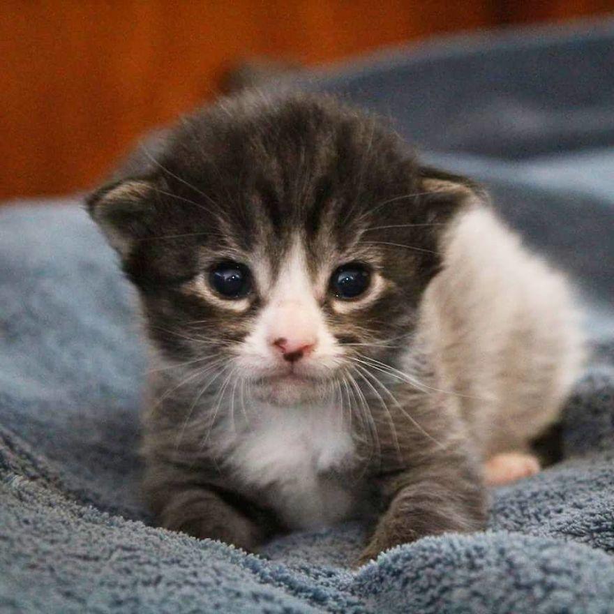 filhotes de gato adoção