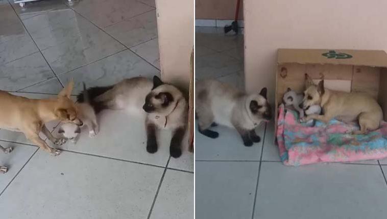 sequestro de gatinho