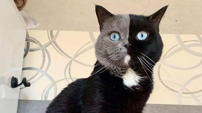 gatinho com rosto dividido ao meio