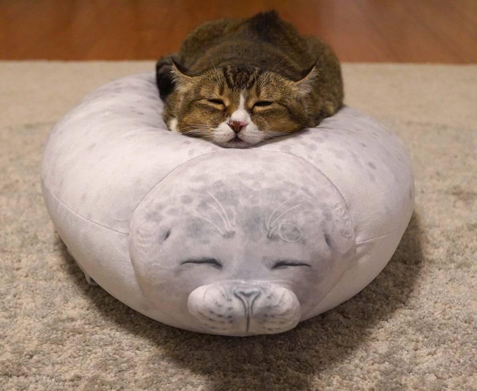 gatinho se apaixona por almofada