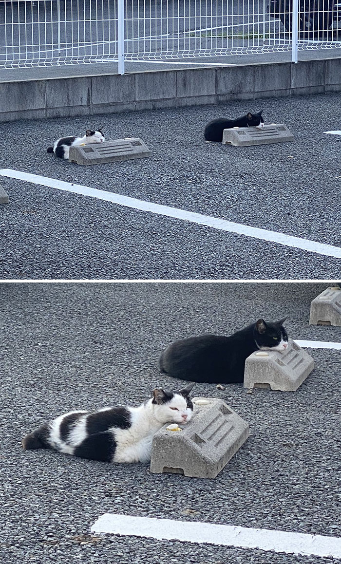 gatinhos estão usando travesseiros