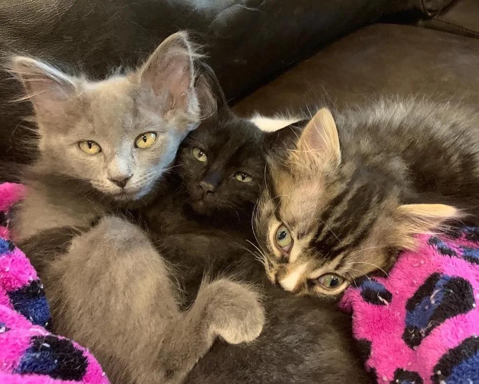 ninhada de gatinhos