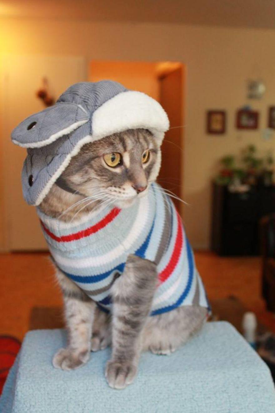 gato com roupas