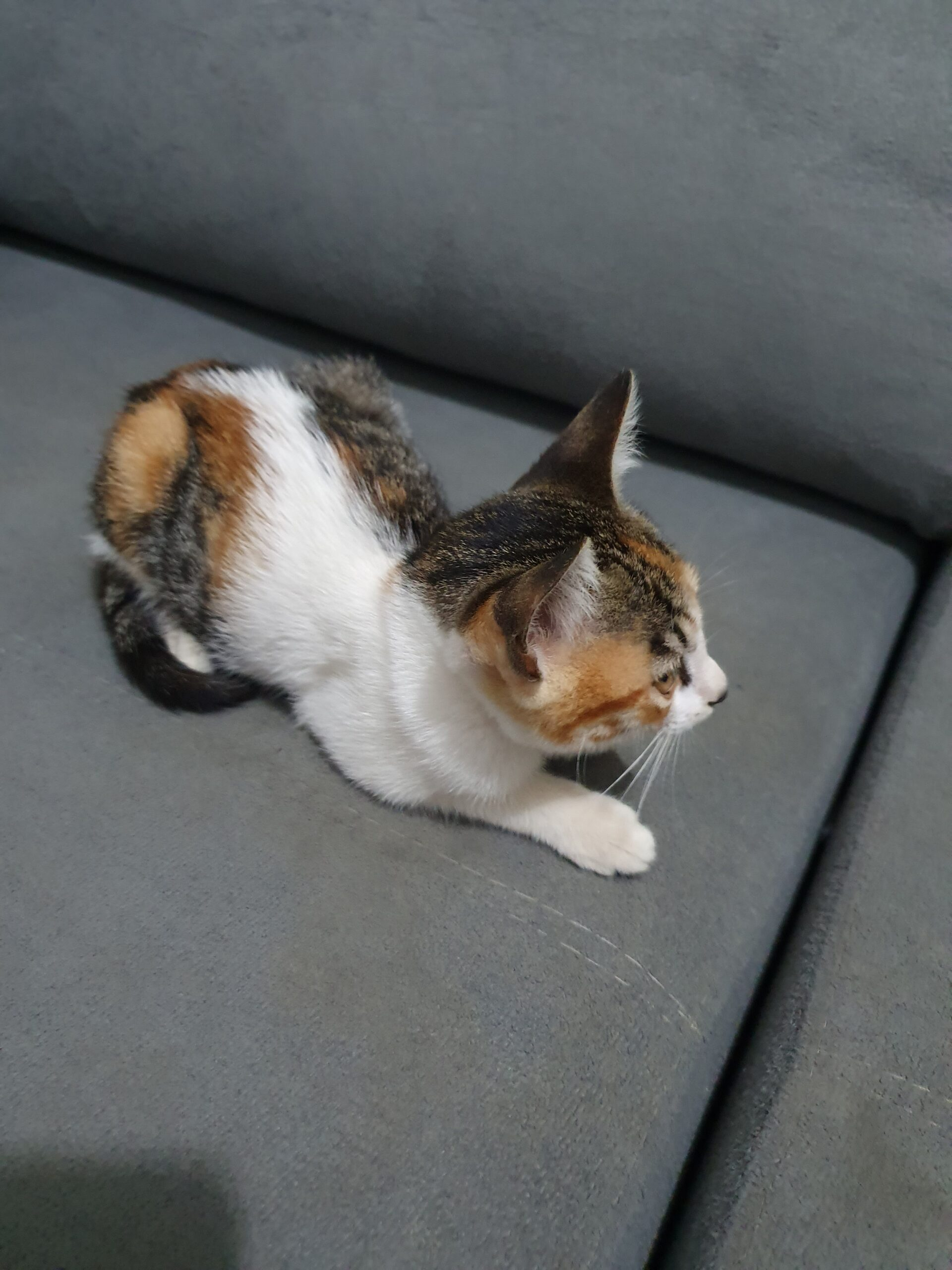 gatinha carinhosa resgatada
