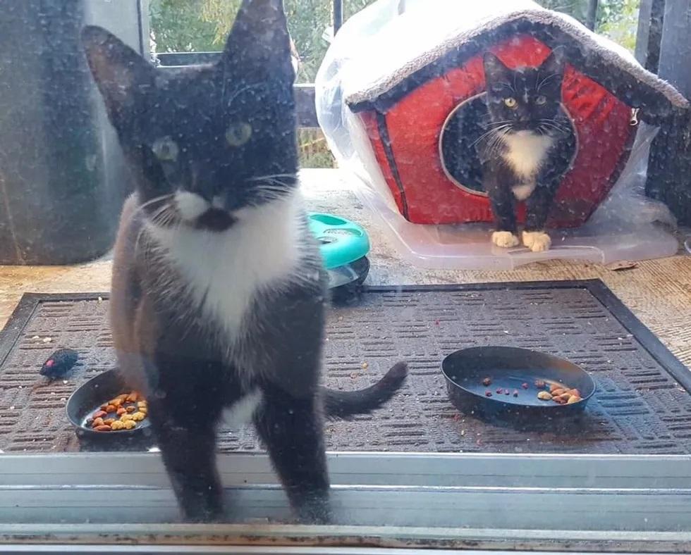gatinhos adotados