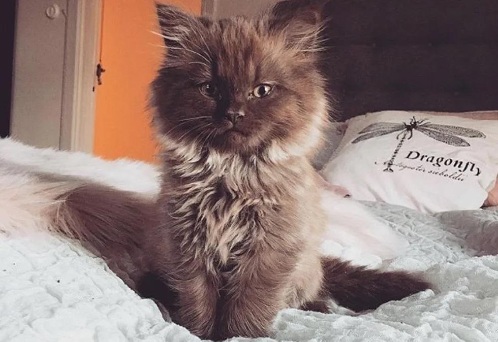 gatinho mais lindo