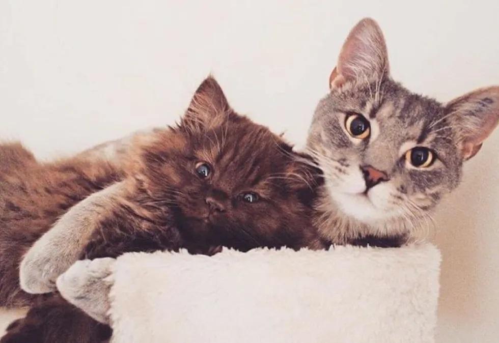 gato mais lindo do mundo