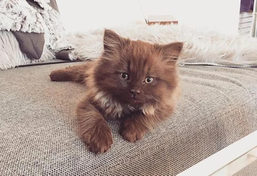 lindo gatinho filhote