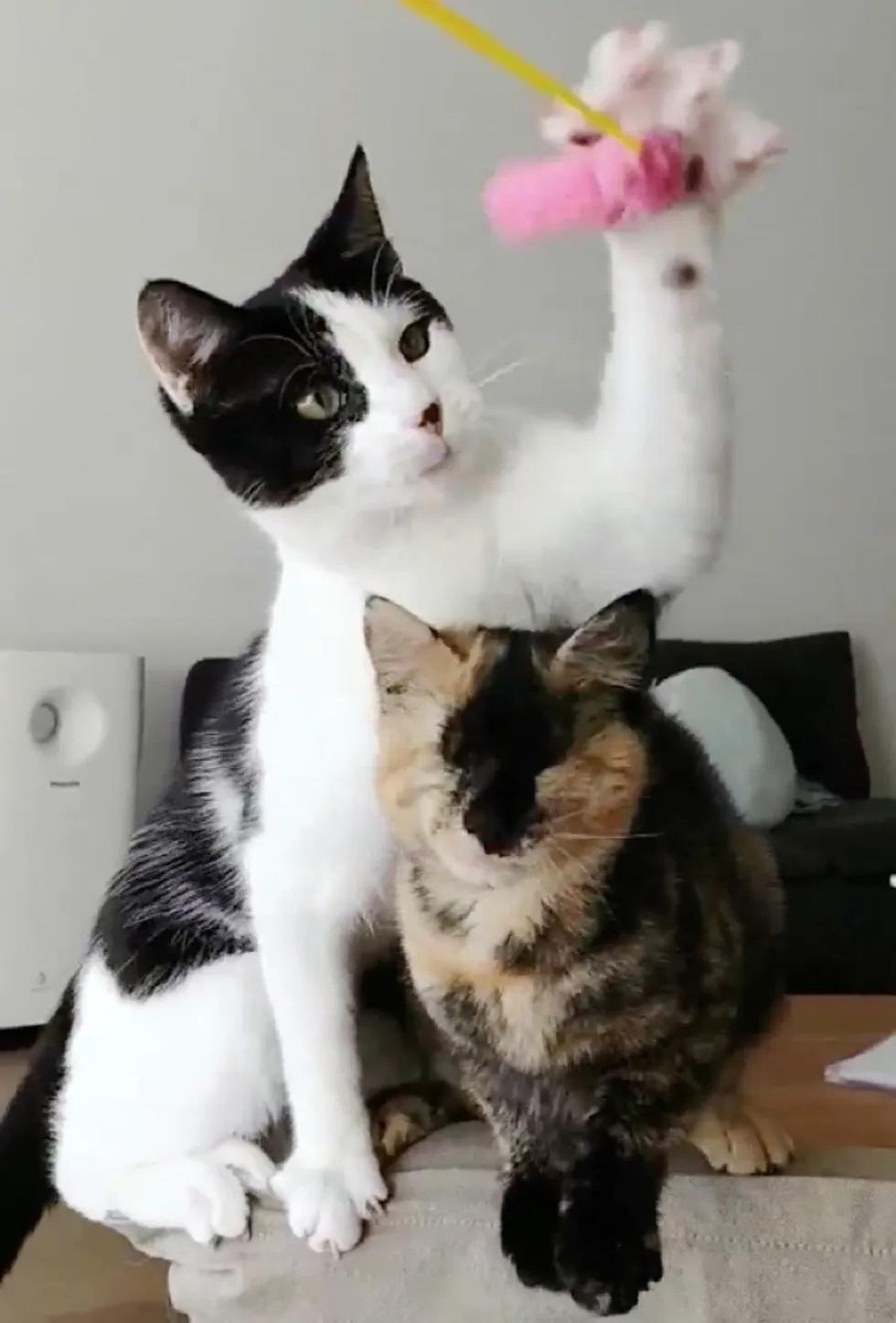 gatinha cega faz amizade com gata