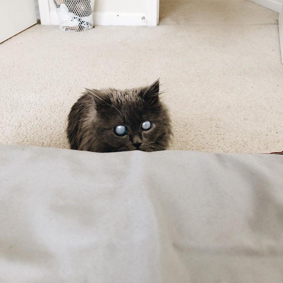 gata com lindos olhos