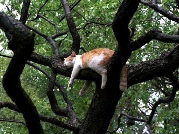 fotos de gatos dormindo