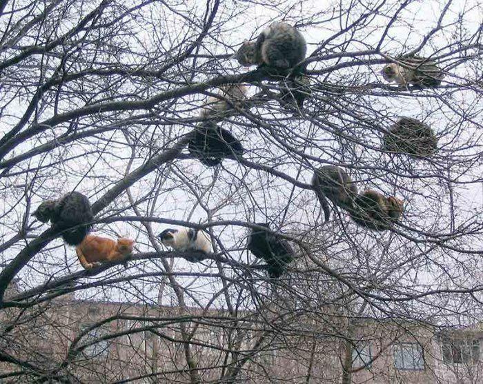 gato na árvore