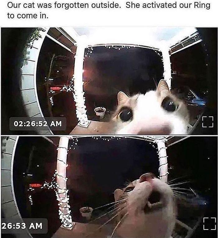 gato do lado de fora