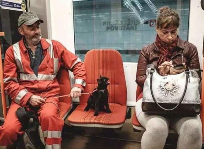 fotos de gatinhos miando