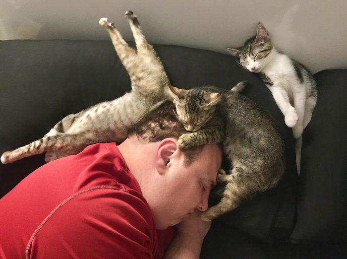 Gatos flagrados dormindo encantam a internet