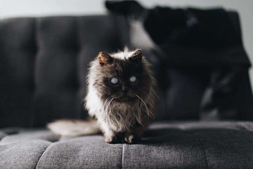 gatinha linda foi adotada