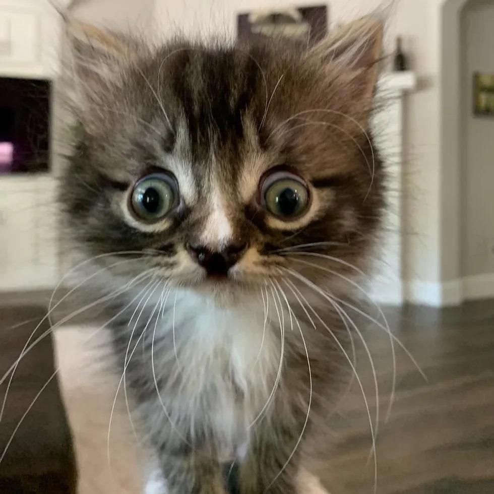 gato com olhos grandes