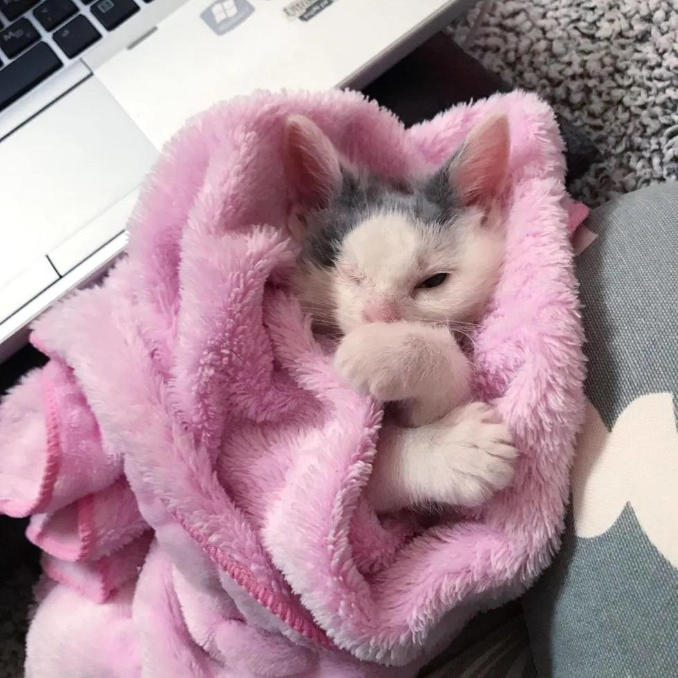 filhote resgatado das ruas