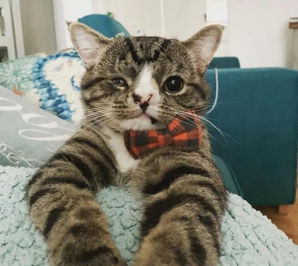 Gato com condição especial abraça