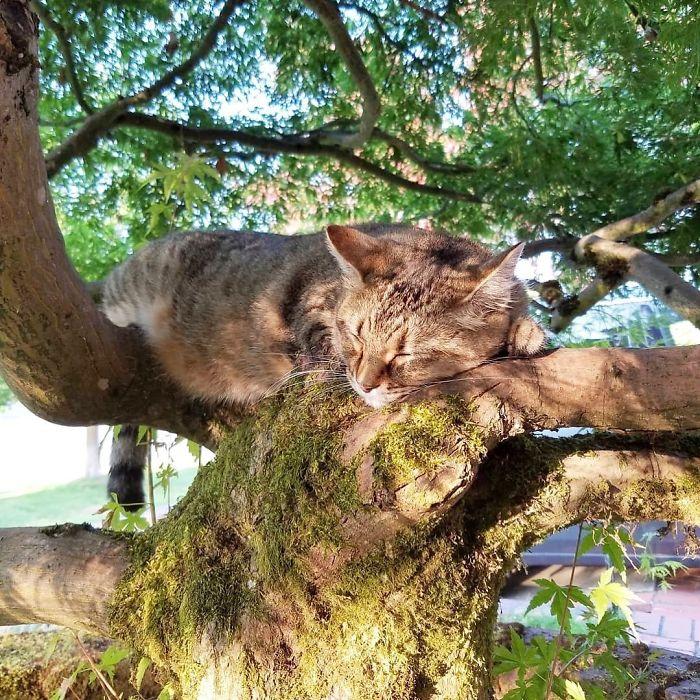 gatos amam árvores fotos