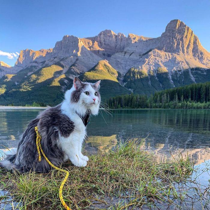 gato lindo aventureiro