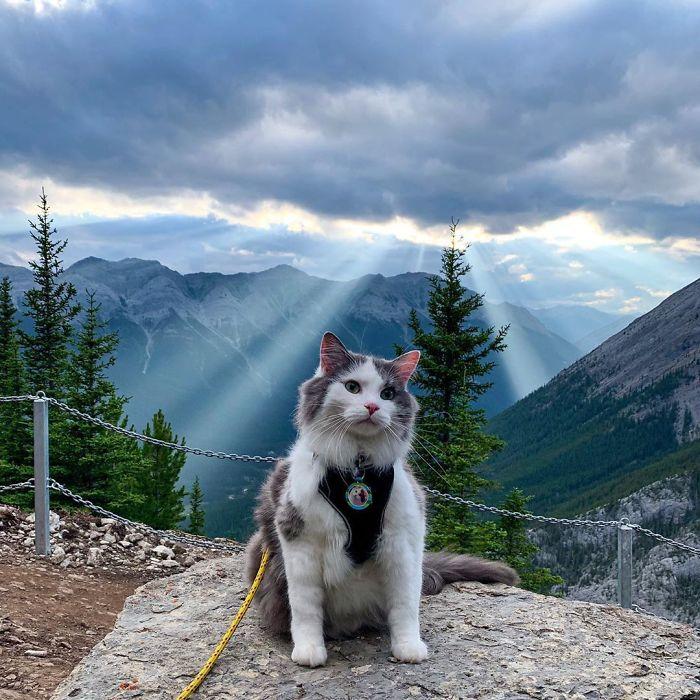 lindo gato instagram
