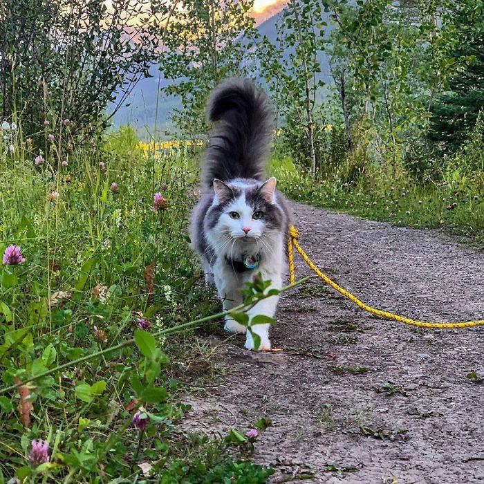 gato aventureiro