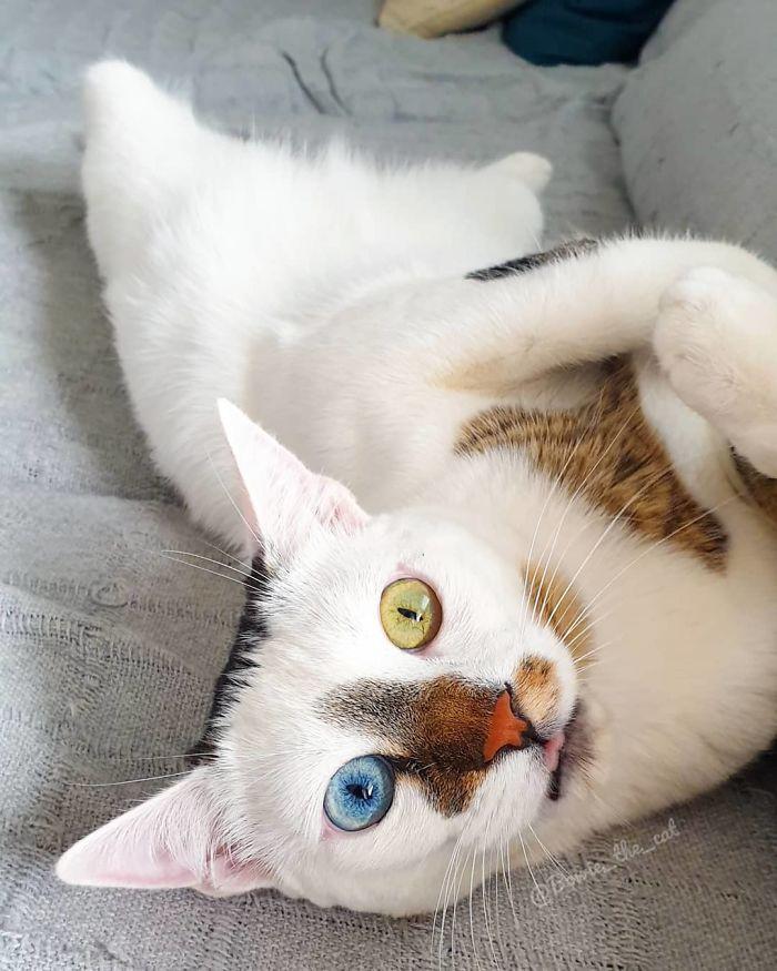 Conheça o gato de rua que foi adotado