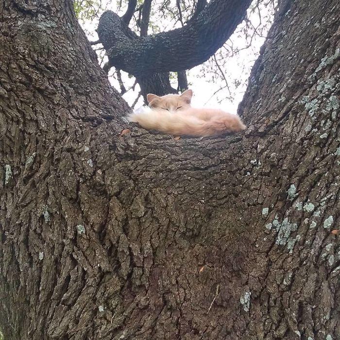por que gato gosta de árvore