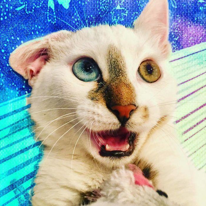 gato de rua que foi adotado viral instagram