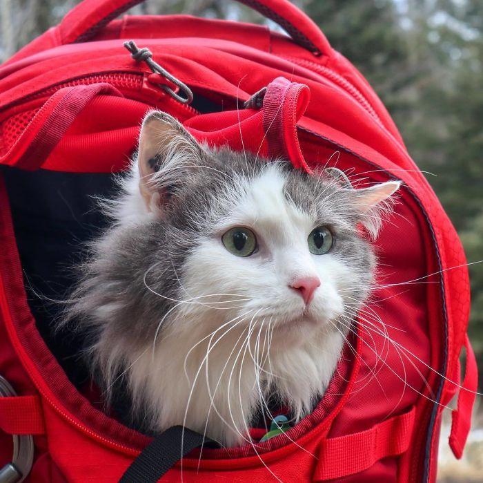 gato de rua adotado