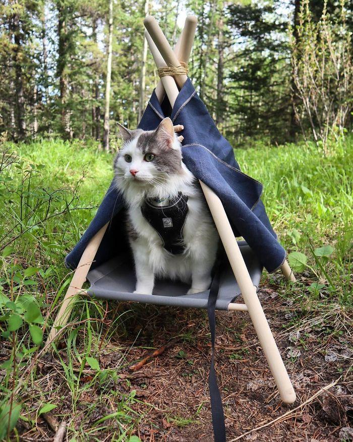 gato de rua aventureiro