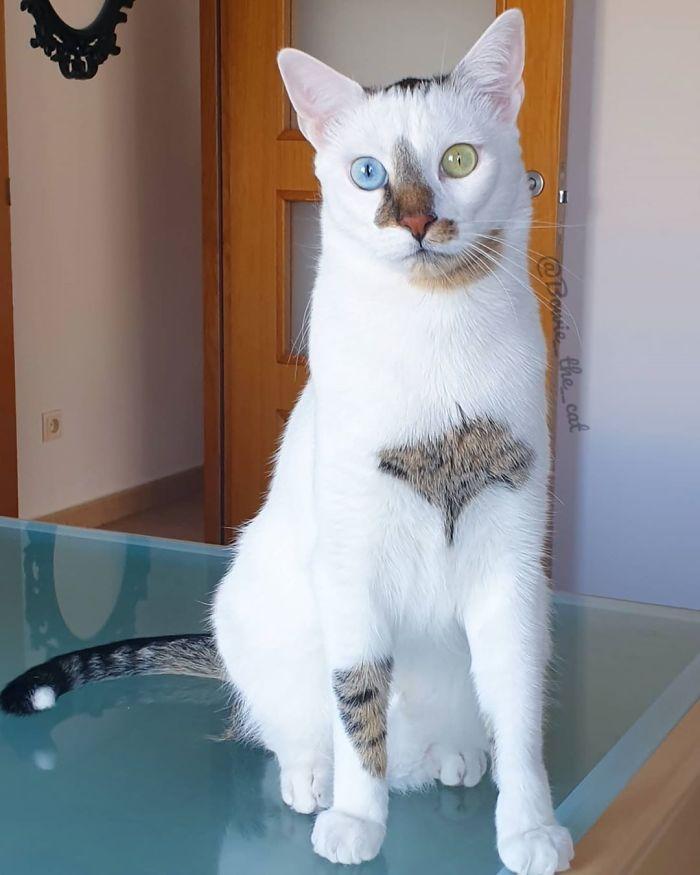 gato de rua que foi adotado viralizou no Instagram