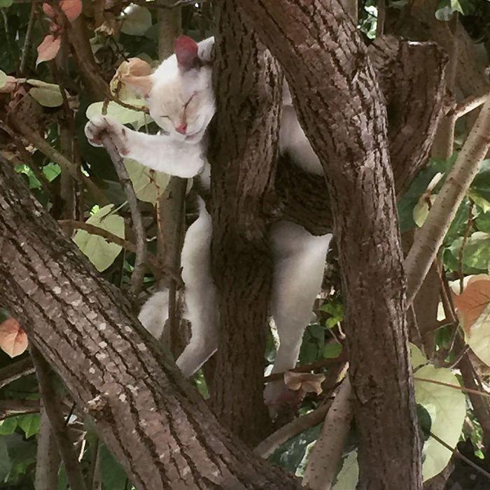 gatos amam árvores imagens