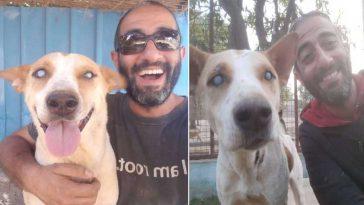 Cachorro-cego-não-contém-a-felicidade